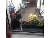 FREE TO A VERY GOOD HOME Rex is a 2 year old female cat who has been spayed she is quiet and timid