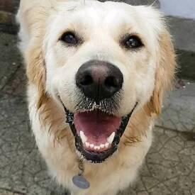 Experienced dog walker/pet sitter