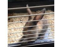 3 month old rabbit