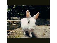 Very cute rabbit