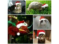 Pet Sitting Service and Reptile / Small Animal boarding in Sunderland