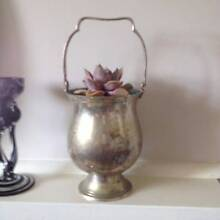 Succulent in silver plated bucket. Westminster Stirling Area Preview