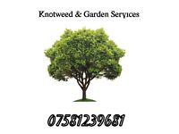 Knotweed spraying & Garden services