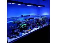 5ft shallow marine aquarium with red sea reefer stand. Xaqua overflow