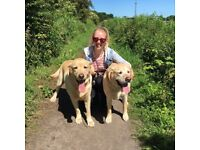 Professional Dog Walker and Pet Sitter in Gateshead - Time to Trot