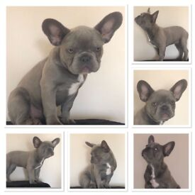 French bulldog. Mummy said Im old enough to find a new home