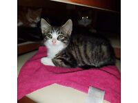 2 beautiful kittens ready for rehoming
