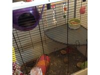 2 X baby rats female large cage