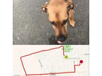Dog walking : Visits
