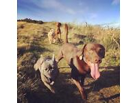 Dog Walker Edinburgh, Small pack sizes, loads of great reviews