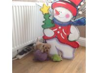 Poochon puppy 1 little girl left Bischon Frise X toy poodle
