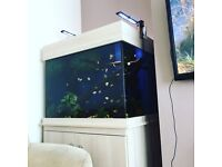 £280 Clearseal marine tank with sump and pump
