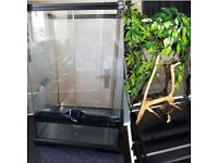 Medium vivarium with artificial plants, bowl and heat mat.