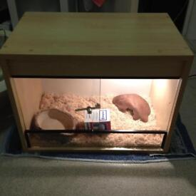 Reptile vivarium set up for sale