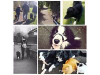 Local Dog Walker and Pet Sitter. Call 07515430766.