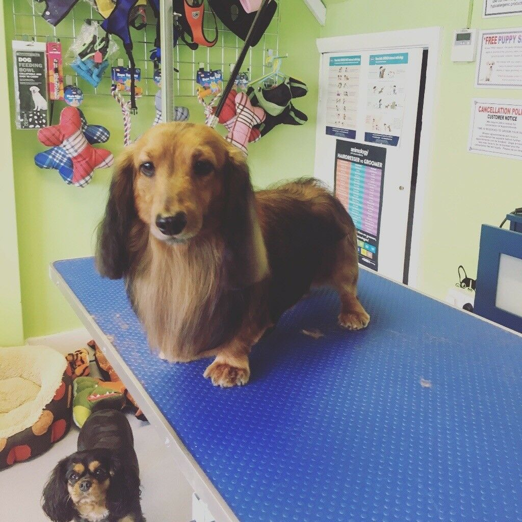 Professional Dog And Cat Grooming Services East Barnet North