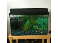 Fish Tank and Table with all Accessories For Sale