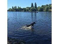 DOGGY DAYCARE: Blackheath / Greenwich