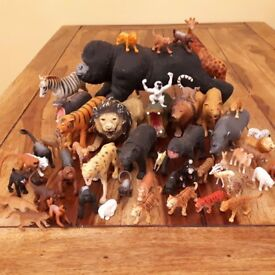 exotic mammal models