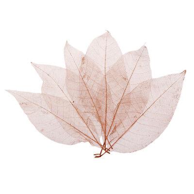 50 Natural Magnolia Skeleton Leaf Card Making Scrapbooking Embellishment Coffee