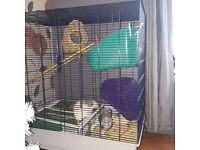 4 fancy rats for sale with cage