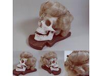 Vanitas plaster cast human skull wearing an 18th Century wig and jewellery
