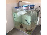 Make an offer. 40L tropical fish tank, fish and extras