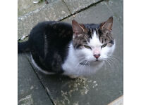 Found tabby and white cat in Clapton