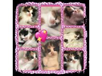 5 beautiful kittens for sale ready to go to their forever home on the 24th November