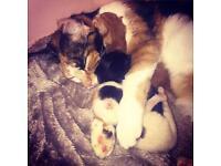 Beautiful kittens (2 left)
