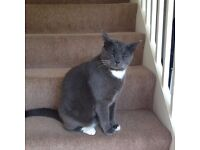 Male tom cat about 6 yrs old