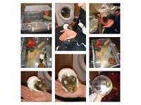 Hand tame hamster with cage and accessories