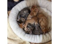 Loving homes required for beautiful kittens