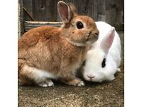 Henry and Lola - need a new home