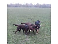 'HAPPY HOUNDS' Dog Walking / Day and Holiday Care / Dog Sitting - for happy dogs and happy owners!