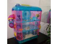 Dwarfs hamsters for sale