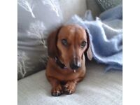 Occasional lift to Newquay for me and my quiet Dachshund starting in May.