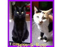 2 female cats need rehoming