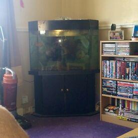 Large corner fish tank and cabinet