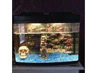 2ft fish tank full set up