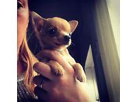 Beautiful little boy puppy