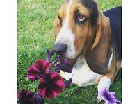 Nellie's Doggy Daycare! Dog Walking, daycare & boarding service
