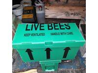 Honey bee 5 frame national nuc, delivered