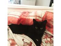 Female Black Cat Needs 'Furever' Home