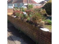 Free ornamental grasses