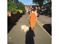 Experienced dog walker and pet sitter/cuddler
