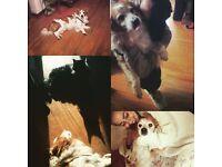 LOVING DOG CARE AND TRAINING