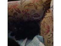 2 kittens one male one famale