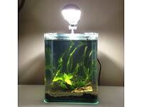 Complete nano aquarium setup