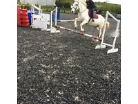 Horse For Loan at Current Yard